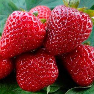 Корни ягод