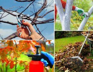 Как подготовить сад к зимнему сезону?